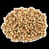 Semilla coriandro